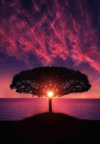 استلام الحب الرومانسي - تفعيل طاقة الأنوثة